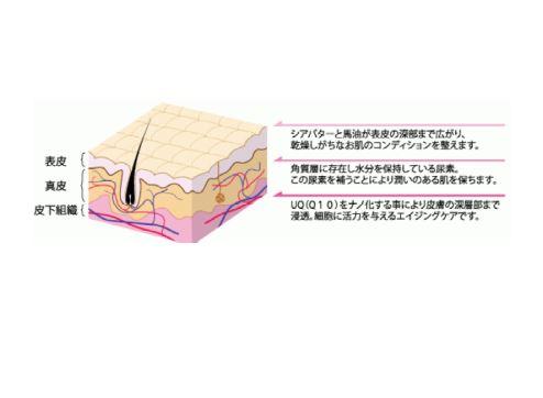 お肌の内部にターゲットを合わせた成分バランス