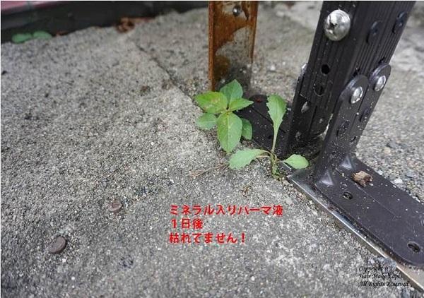 プレゼンテーション1(99)